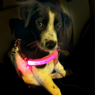 Rechargeable Glowing LED Pet Dog Cat Harness Safety Leash